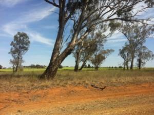 Road to Temora