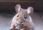 http://i650.photobucket.com/albums/uu221/dunc_89/mouse-cute.jpg