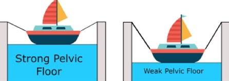 Figure 3: Pelvic Floor